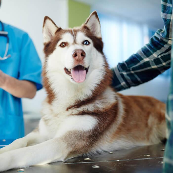 Ветеринар-диетолог