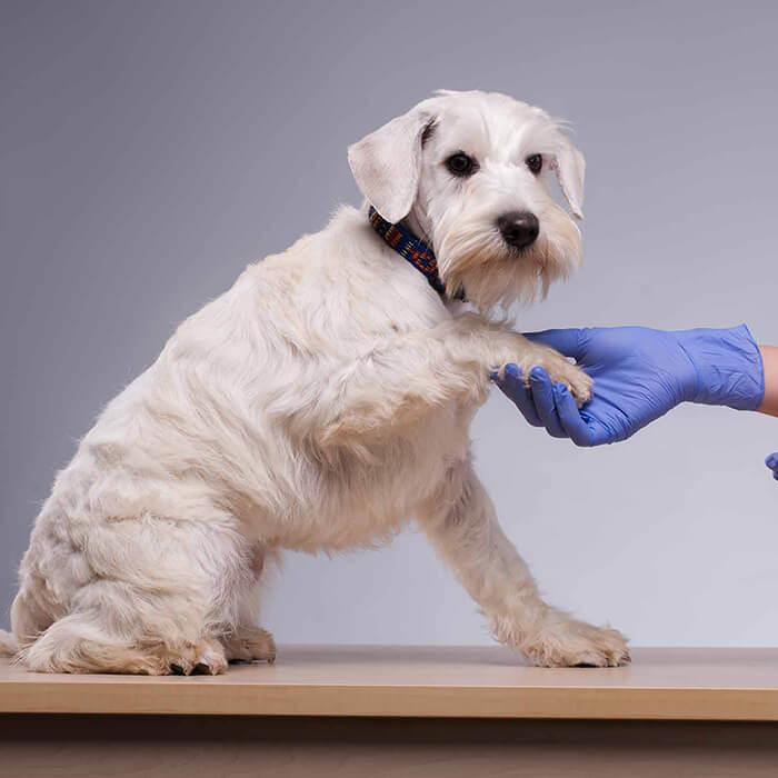 Ветеринарная неврология в Москве