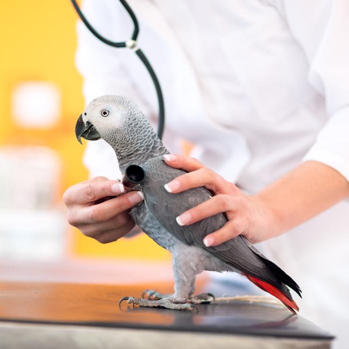 Ветеринарная клиника для птиц