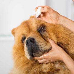 Ветеринарный врач-офтальмолог