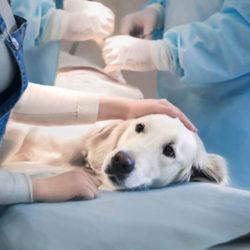 Ветеринарный врач-хирург
