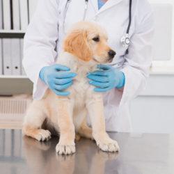 Ветеринар-репродуктолог