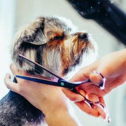 Салон красоты Dr.Hug в САО для домашних животных
