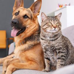 Диспансеризация домашних животных